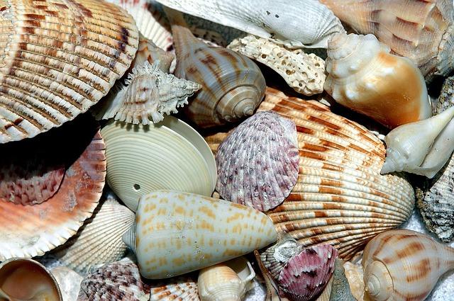 mořské mušle