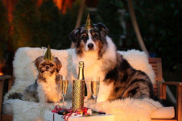 psi, silvestr, šampaňské